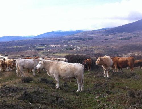IGP Carne de la Sierra de Guadarrama